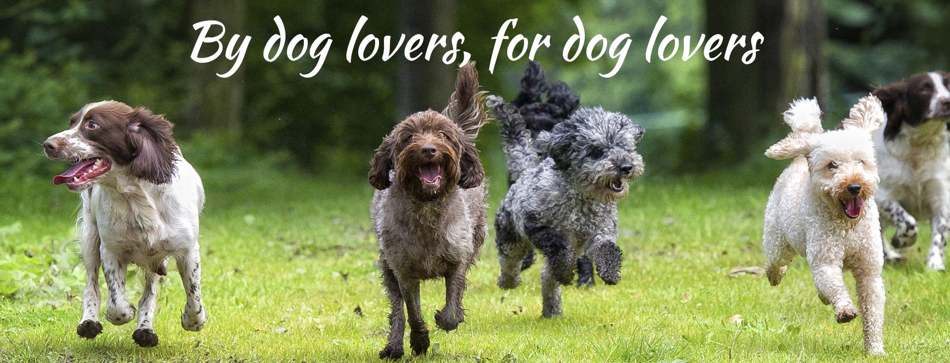 Organic diy dog wash brunswick dooba diy dog wash dooba dog wash melbourne diy dog wash melbourne solutioingenieria Choice Image