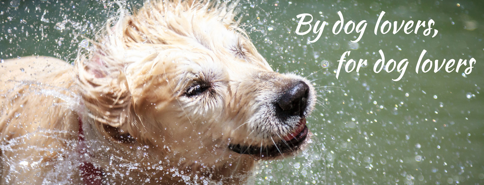 Organic diy dog wash brunswick dooba diy dog wash dooba dog wash melbourne diy solutioingenieria Choice Image
